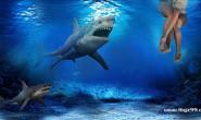 鲨鱼的笑话